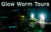 The magic of glow worms...